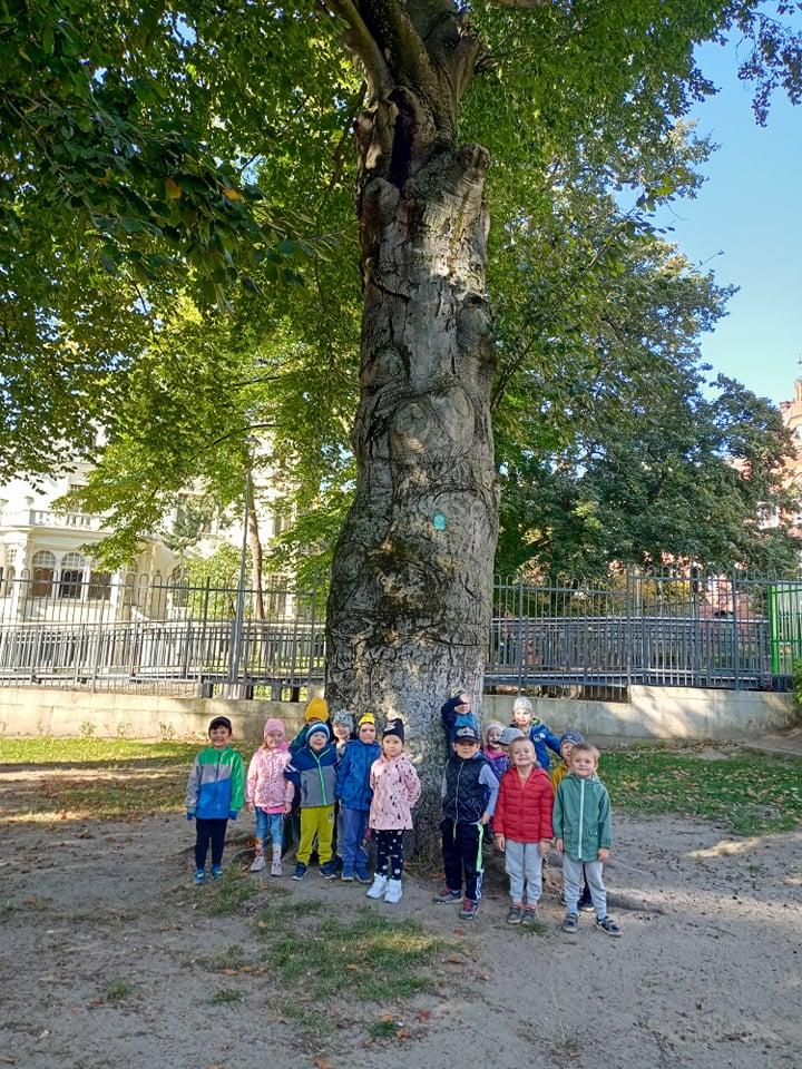 dzien drzewa